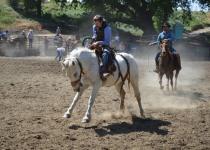 Sympatia inwestorów na pstrym koniu jeździ